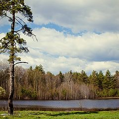 "фото ""Озеро лесное"""