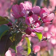 """photo """"Pink May."""""""