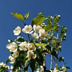 """фото """"Когда яблони цветут"""""""