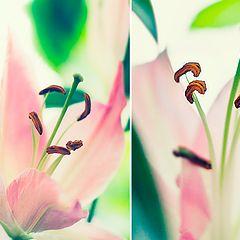 """album """"Flower"""""""