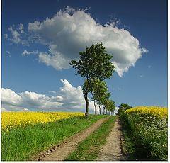 "фото ""yellow field"""