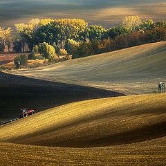 """photo """"Autumn fields"""""""
