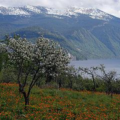 """фото """"В яблоневом саду п.Яйлю 27 мая 2011г"""""""
