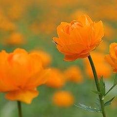 """фото """"Тайга цветет"""""""