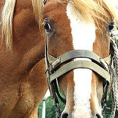 "фото ""лошадь"""