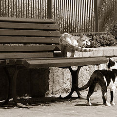 """photo """"""""Get out of here!!! It""""s my bench!"""""""""""