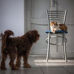 """фотоальбом """"Cats and dogs"""""""