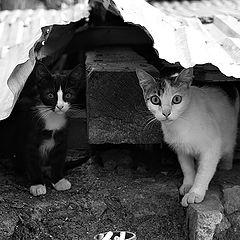 """album """"Cats"""""""