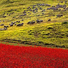 "фото ""red grazing"""