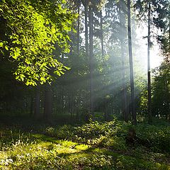 """photo """"Early morning in the forest"""""""