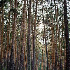 """фото """"атмосфера леса.."""""""