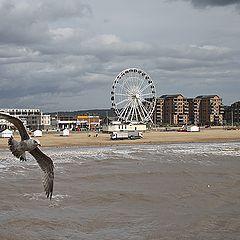 """фото """"Про море и  чайку, влетевшую в кадр."""""""