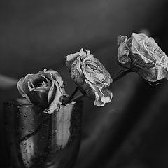 """фото """"Roses of memories"""""""