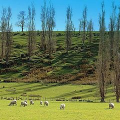 """photo """"Sheep Farm"""""""
