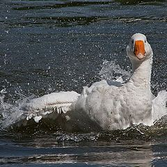 """photo """"Bathing in the fun."""""""