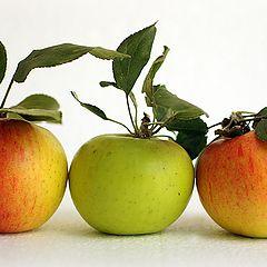 "фото ""Яблочный натюрморт"""