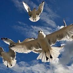 """фото """"Seagulls"""""""