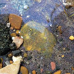 "photo ""magical stone"""
