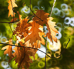 "фото ""Осень наступила"""