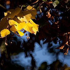 "фото ""Осень наступила-2"""