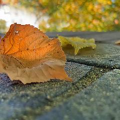 """photo """"Golden autumn."""""""