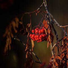 """фото """"Осенняя."""""""