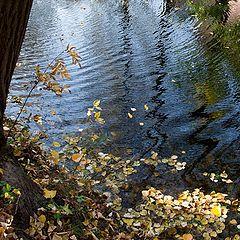 "photo ""autumn reflections"""