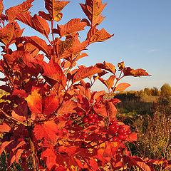 """фото """"Осенний костер"""""""