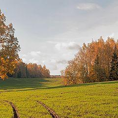 """photo """"Golden autumn"""""""