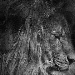 "photo ""His Majesty"""