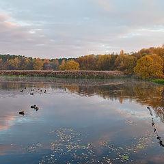 """photo """"Autumn morning"""""""