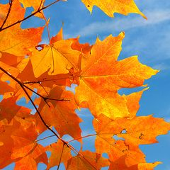 """фото """"Colors of the fall"""""""