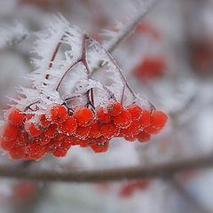 """фото """"замороженный ветер"""""""