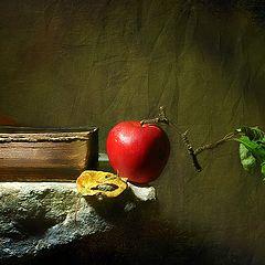 """photo """"Still Life"""""""