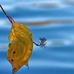 """photo """"Gold auf Blau."""""""