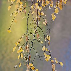"photo ""Autumn tenderness."""