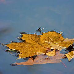 """photo """"Farewell to autumn."""""""