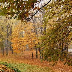 """фото """"Взгляд   в  осень..."""""""