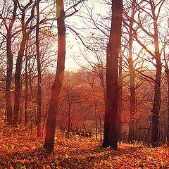 """фото """"Осень."""""""