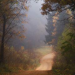"""photo """"Path through the autumn"""""""
