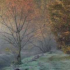 """фото """"the first cold day"""""""