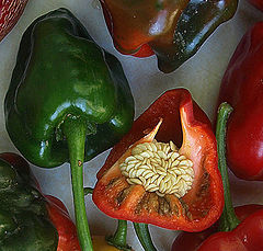"photo ""Peppers"""