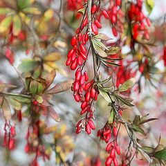 "photo ""coral beads of Autumn"""