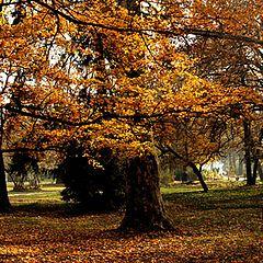 """photo """"есенни багри"""""""