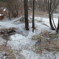"photo ""the beginning of winter 3"""