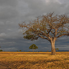 "photo ""Evening landscape"""