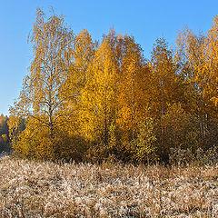 """фото """"Осень. Морозное утро."""""""