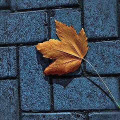 "photo ""Solo lone leaf."""