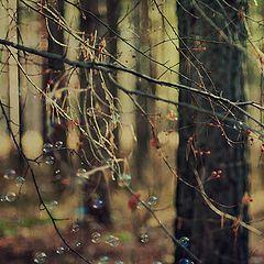 "фото ""Ветви"""