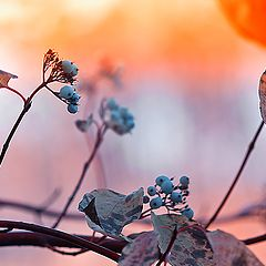 "photo ""The mood of autumn."""